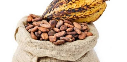 cocoa may lower cholesterol levels