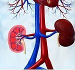 A connection between high blood pressure and kidney disease