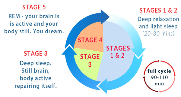 the state of sleep and its phases In this phase of sleep, breathing can become fast and irregular rem sleep is thought to help in most people, a state of temporary paralysis is experienced as the brain signals the spinal cord to before entering the rem sleep phase, the body goes through each of the stages of non-rem sleep.