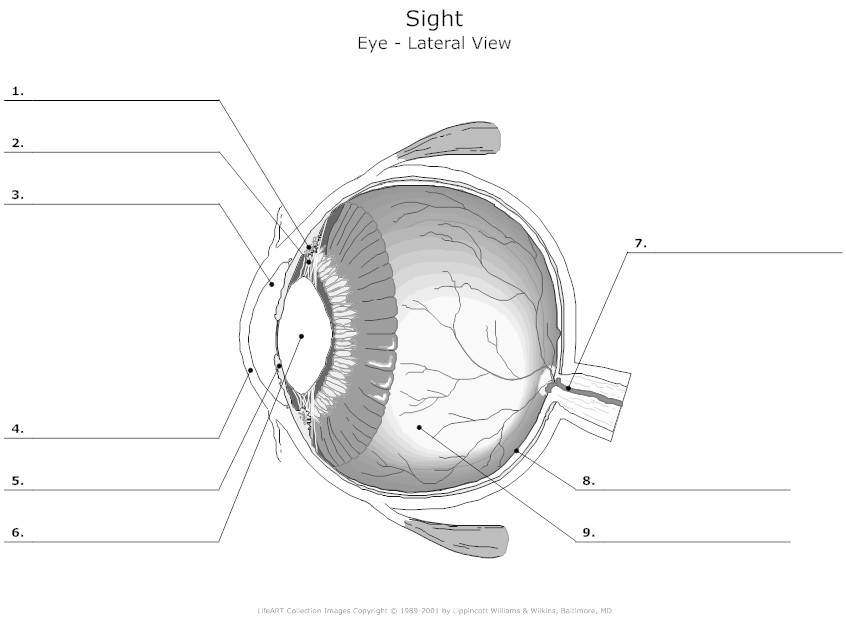 Blank eye diagram ccuart Image collections