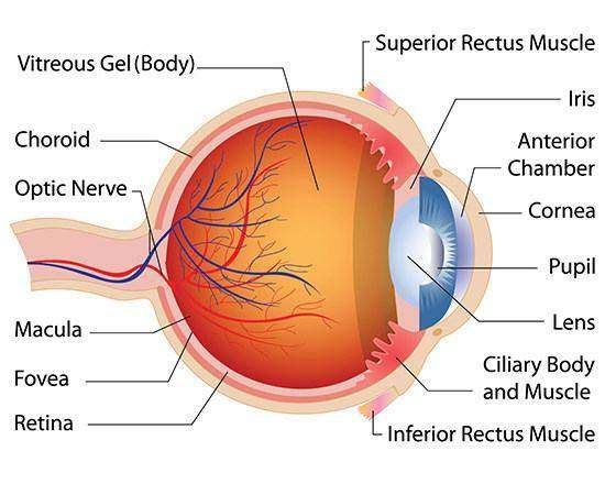 Eye    diagram       labeled      Healthiack