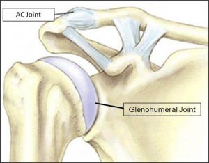 Pictures Of Acromioclavicular Ligaments