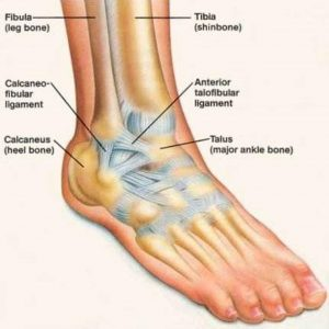 Pictures Of Ankle