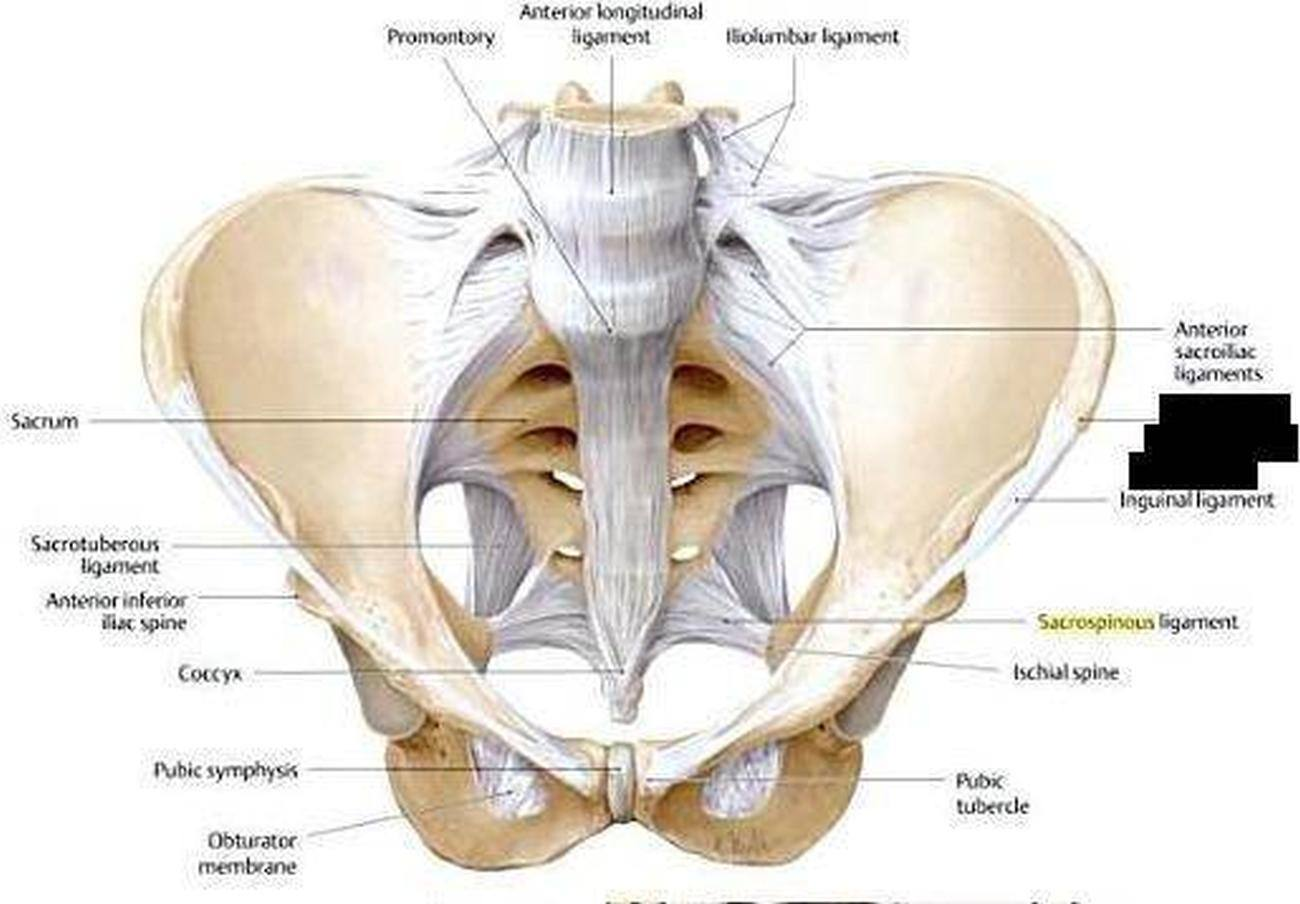 Pictures Of Anterior Sacroiliac Ligament