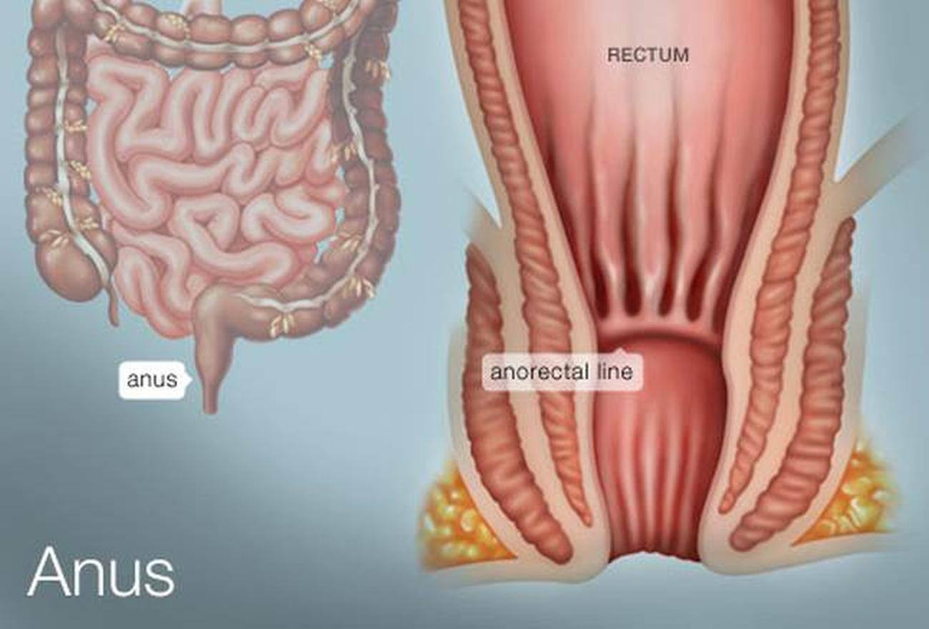 pictures of anus rectum diagram