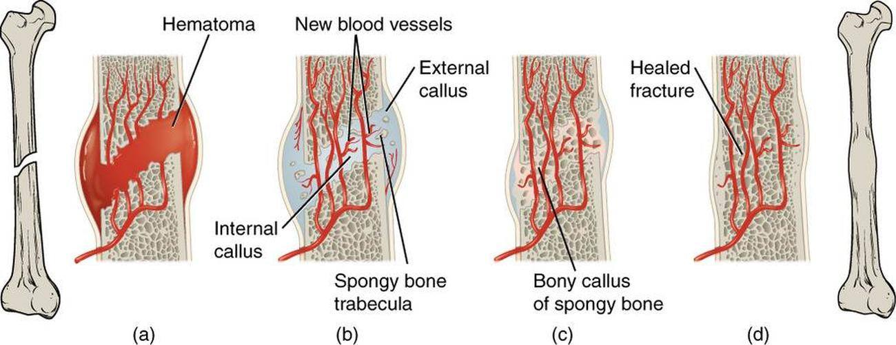 Pictures Of Bony Process