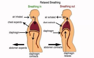 Pictures Of Breathing