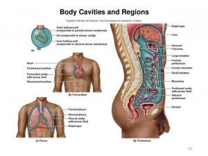 Pictures Of Cavity, Anatomical