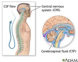 Pictures Of Cerebrospinal Fluid