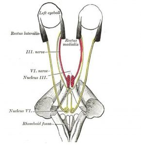 Pictures Of Abducent Nerve