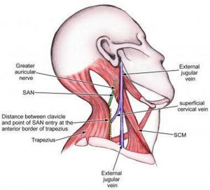 Pictures Of Accessory Nerve