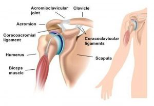 Pictures Of Acromioclavicular Joint