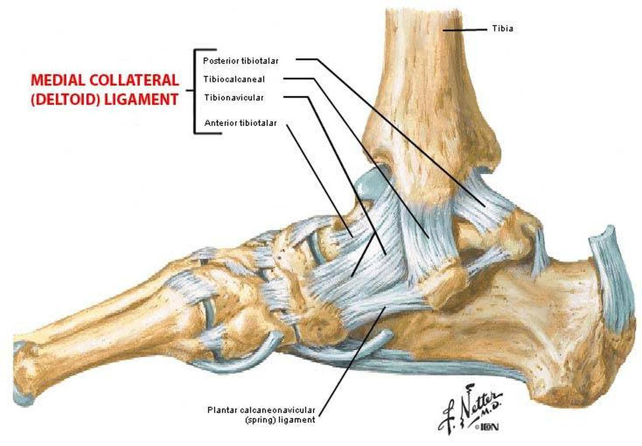 Pictures of ankle ligaments 7 Tips for Taking Better Photographs of Cars