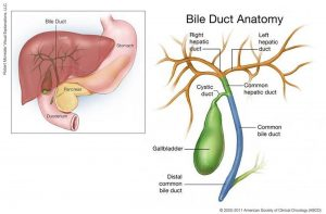 Pictures Of Bile Duct