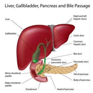 Pictures Of Biliary Tract