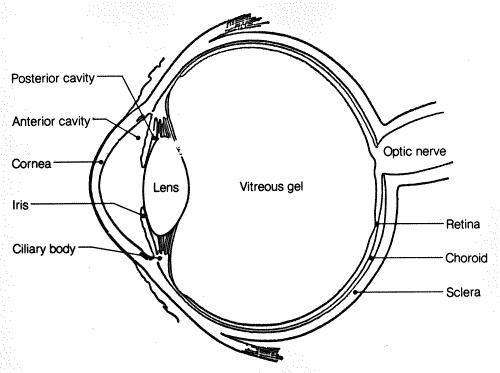 Simple eye diagram car wiring diagrams explained simple eye diagram rh healthiack com simple eye makeup diagram simple eye makeup diagram ccuart Images