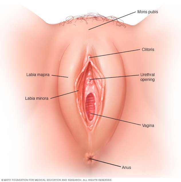 What Does The Perfect Vagina Look Like