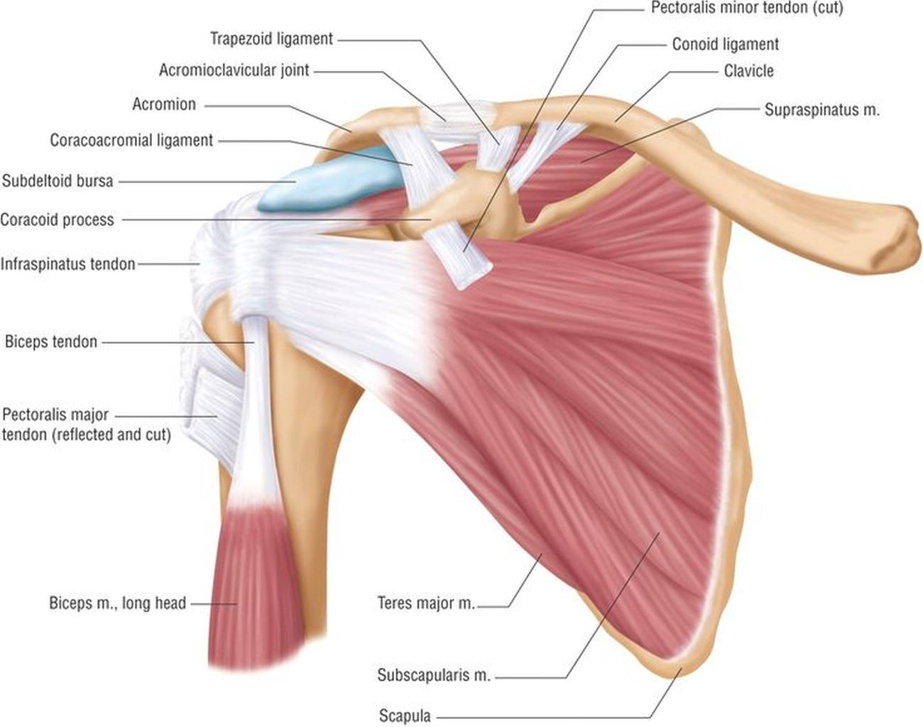 8 Ways to Treat a Rotator Cuff Injury