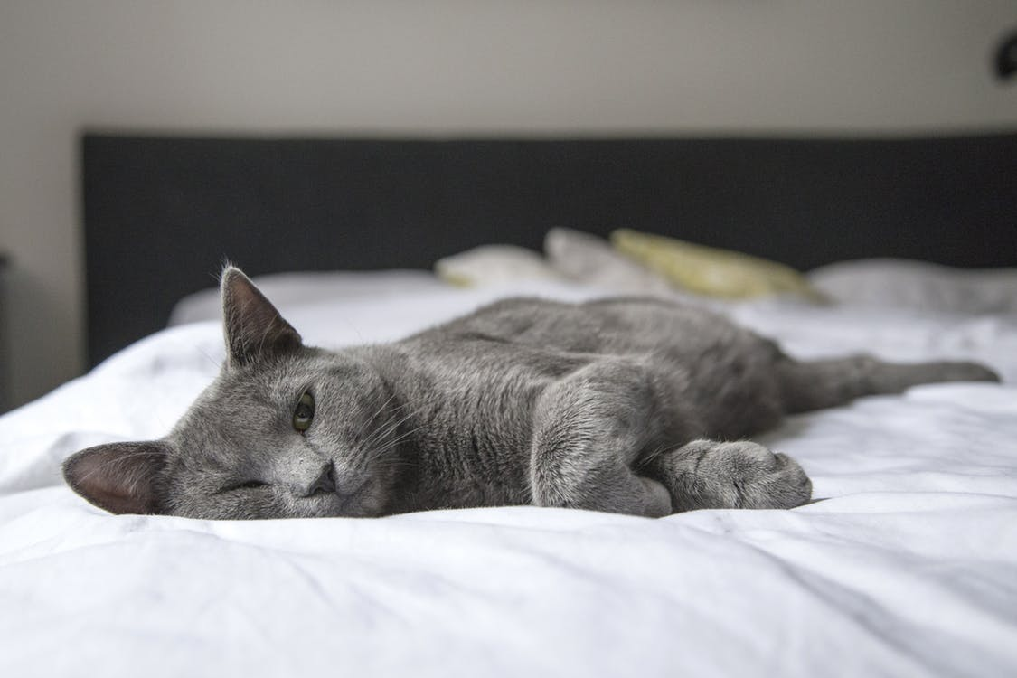 cat-sleeping-on-mattress