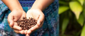 Stay Healthy and Awake with The Best Organic Coffee