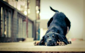 5 Ways Dogs Benefit Their Owner's Health