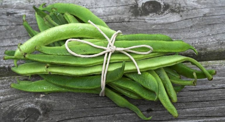 Discover the magic of Runner Beans